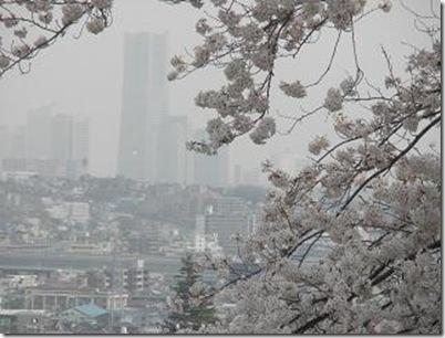 桜・浄水場JPG