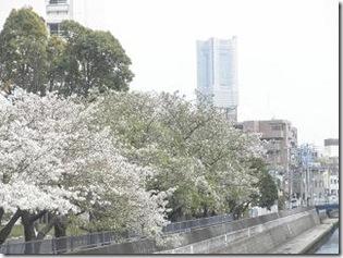 桜・天王町
