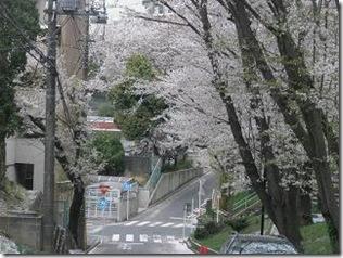 桜・千丸台