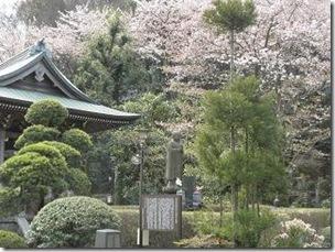 桜・随流院